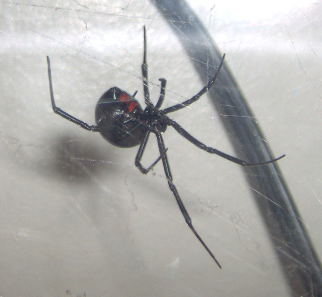 exterminate spiders with Gilmer pest control