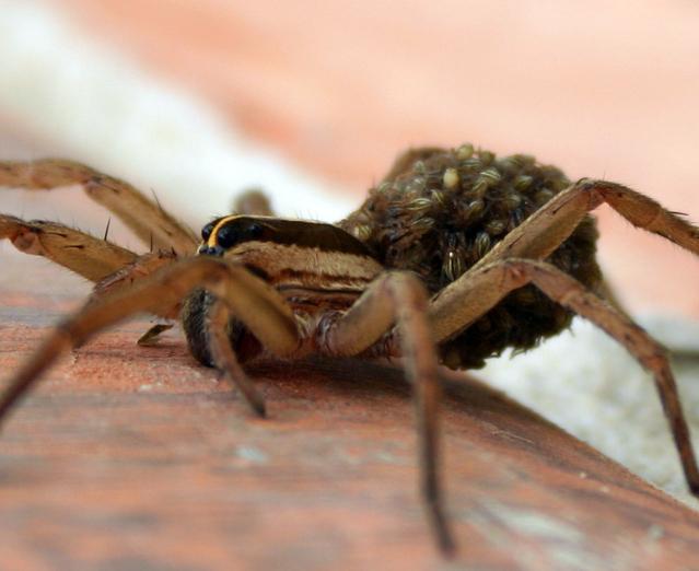 Longview spider pest control and exterminator