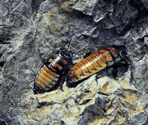 cockroach exterminator in Gilmer