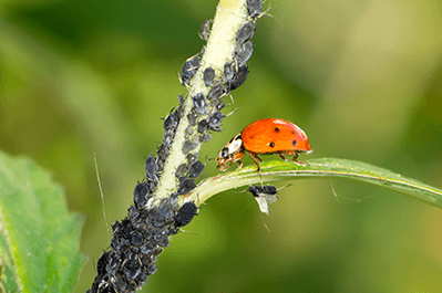 pest control for insects in Longview