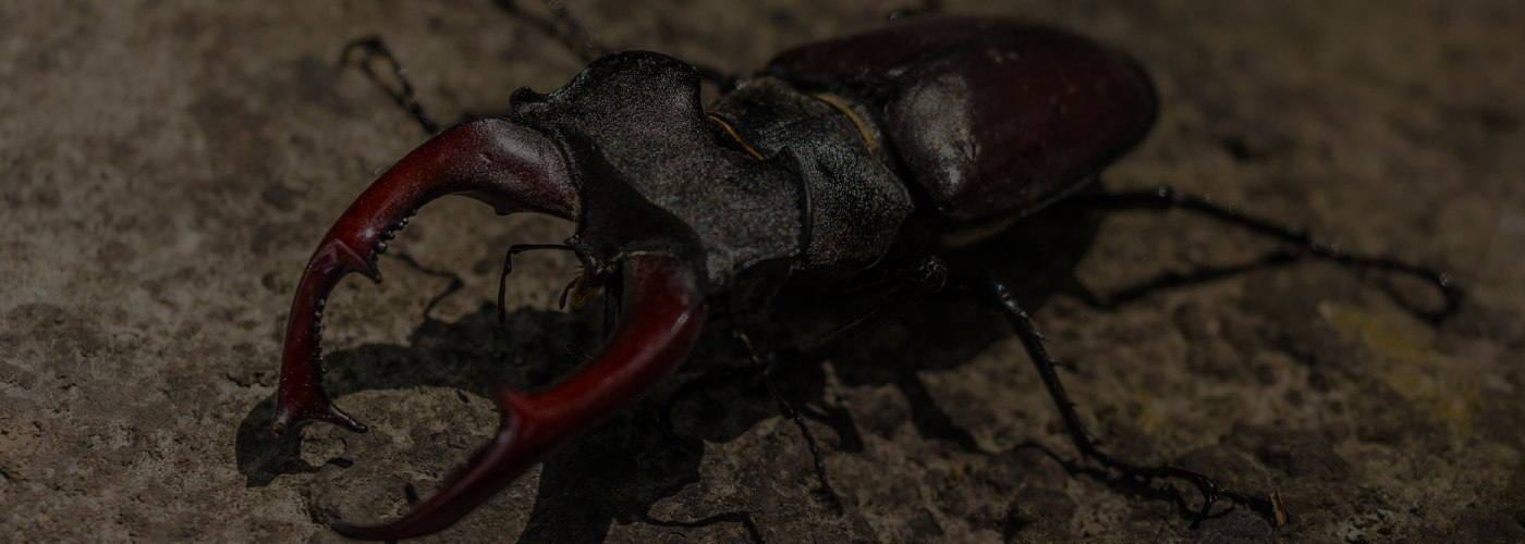 Weird Insects Around the World