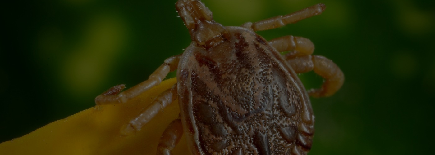Small Bug, Big Bite